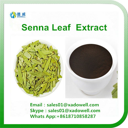Herb extract- senna leaf extract 8% 10% 20%