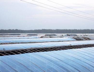 High quality transparent greenhouse film