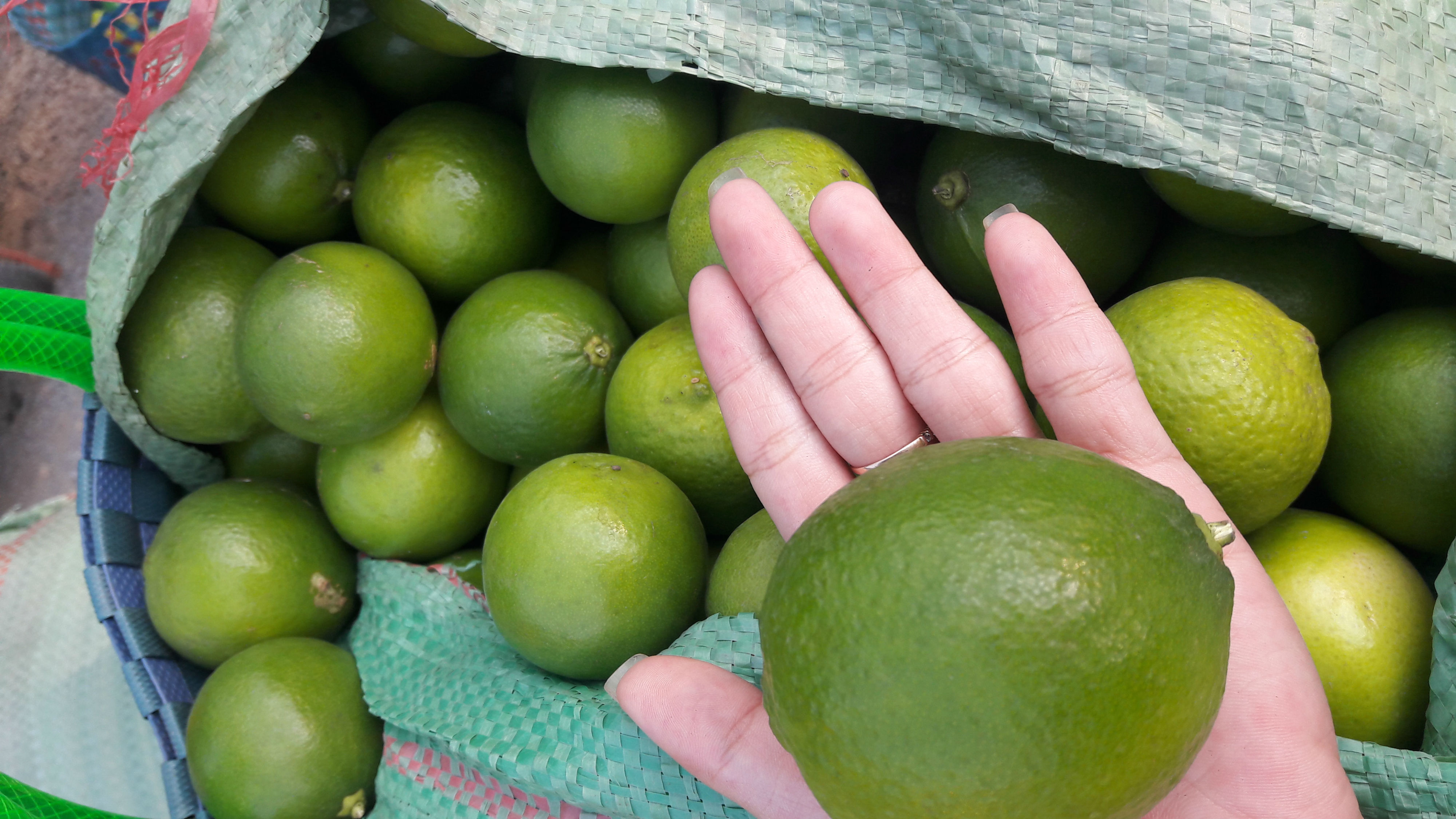 SEEDLESS LIME-HIGH QUALITY-HP:+1204590950