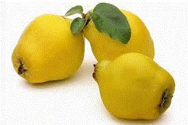 quinces ( fresh )