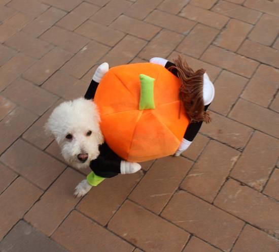 Pumkin Costumes for Dog