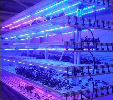 QT-LED1218 Plant Fill Light Lamp