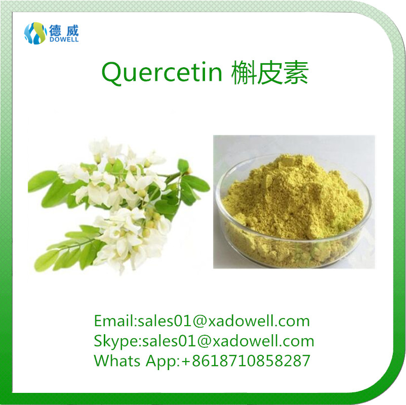 Sophora Japonica Extract Natural Herbal Extract Quercetin HPLC95%/UV98%