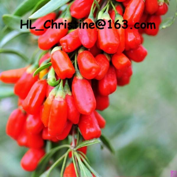 organic goji berry wholesale