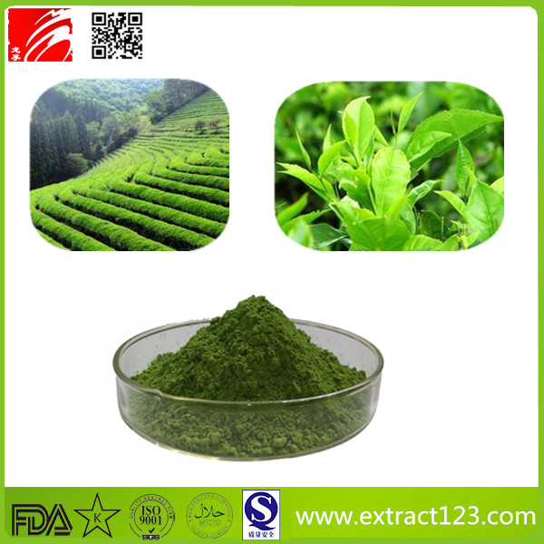 High Quality Green Tea Extract