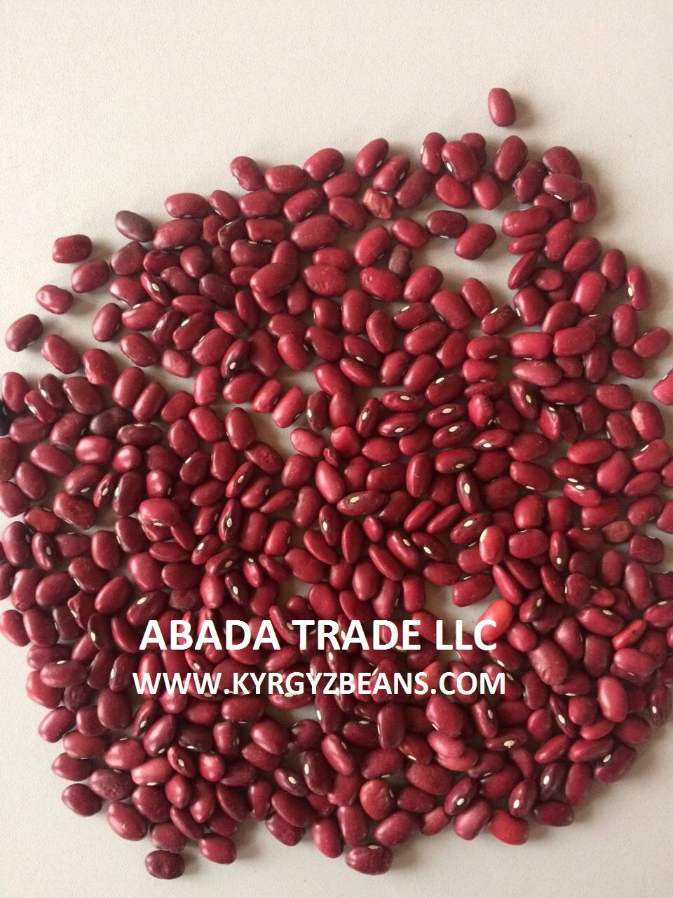 Red kidney beans of 2015 crop