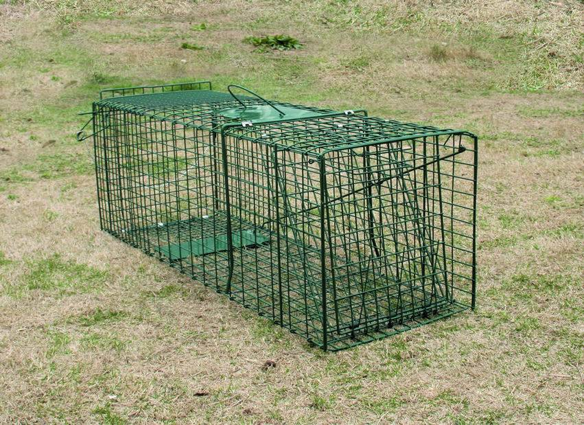 Collapsible Raccoon Skunk Fox Trap For Sale