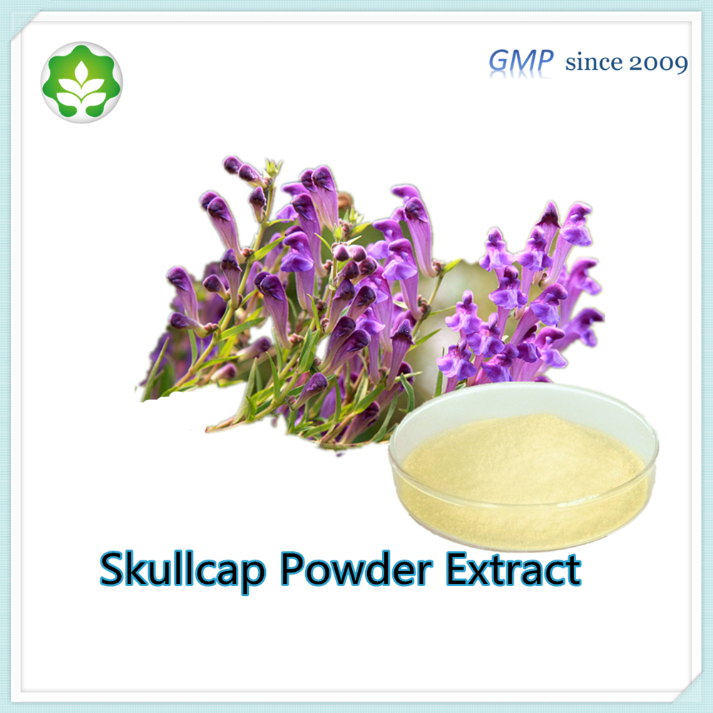 hot selling skullcap extract powder Anti-aging