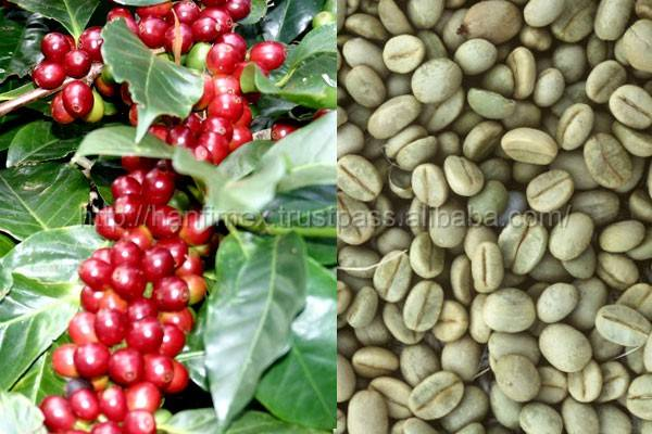 Cheapest price High Quality Coffee Beans 2016