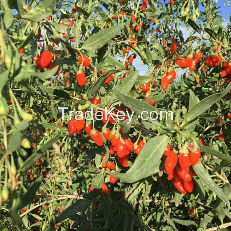 Supply  High Quality Dried goji berries fruit /Chinese wolfberry