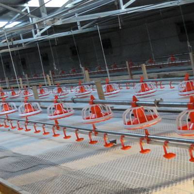 automatic poultry equipment for broiler growing