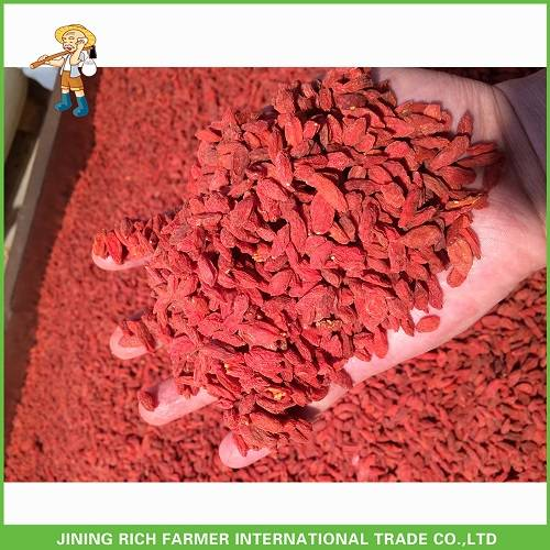 Hot sale high quality Ningxia red goji berry with best price