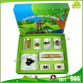 Preschool Educational Medicinal Plants set for Teaching Aids or Display