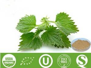 Nettle Root Extract - 5:1, 10:1