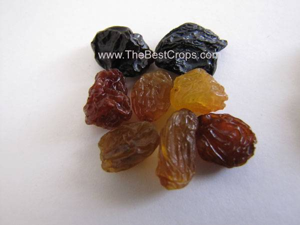 Raisin, Top grade from Iran (Malayer, Maragheh, Bonab)