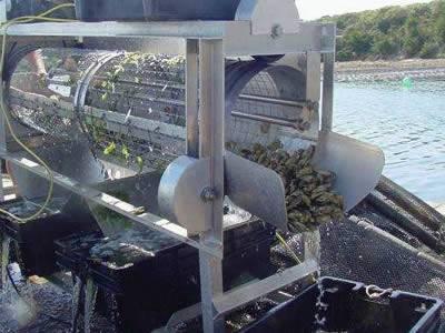 Oyster Sorting Tumbler