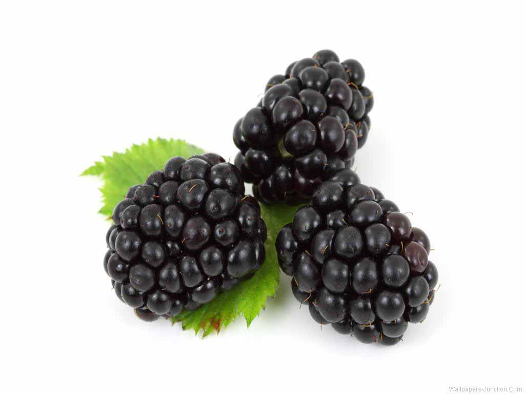 IQF frozen blackberry fruit fresh blackberry fruit