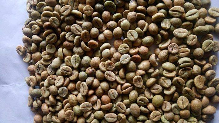 Raw coffee beans,Green arabica coffee, robusta coffee beans