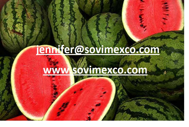 Vietnam Fresh Water Melons