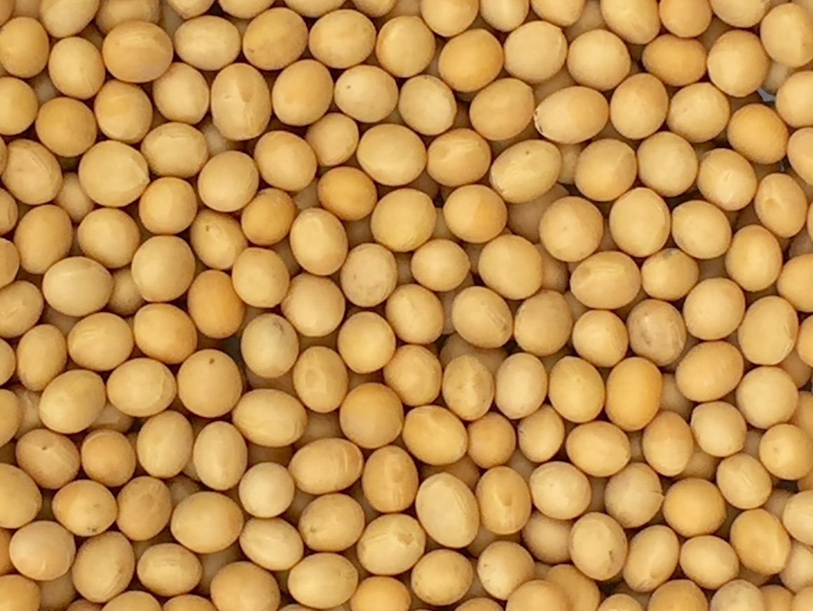 Buy 100% Pure Soy bean wholesale