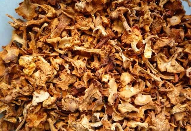 Dried chanterelle wild mushroom