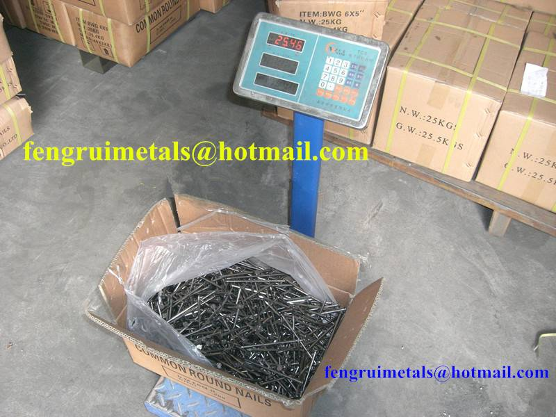 Common round nails for export