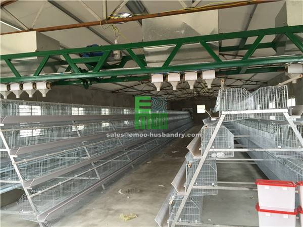Wholesale poultry farm equipment 4 tier chicken cage