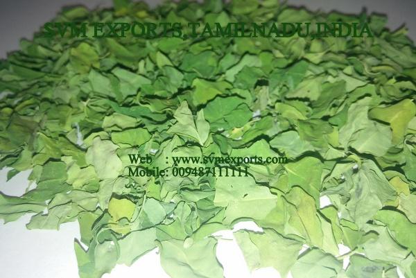 100% Pure Moringa Dry Leaves Exporters India