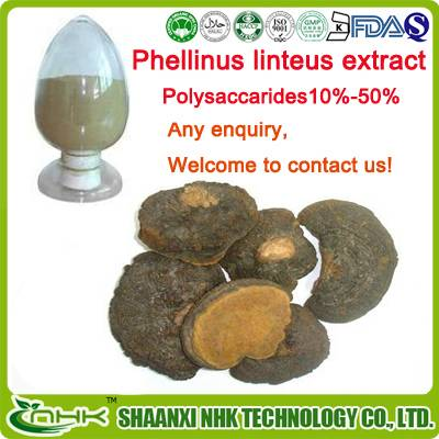 Factory direct supply organic and natural Phellinus Linteus Extract
