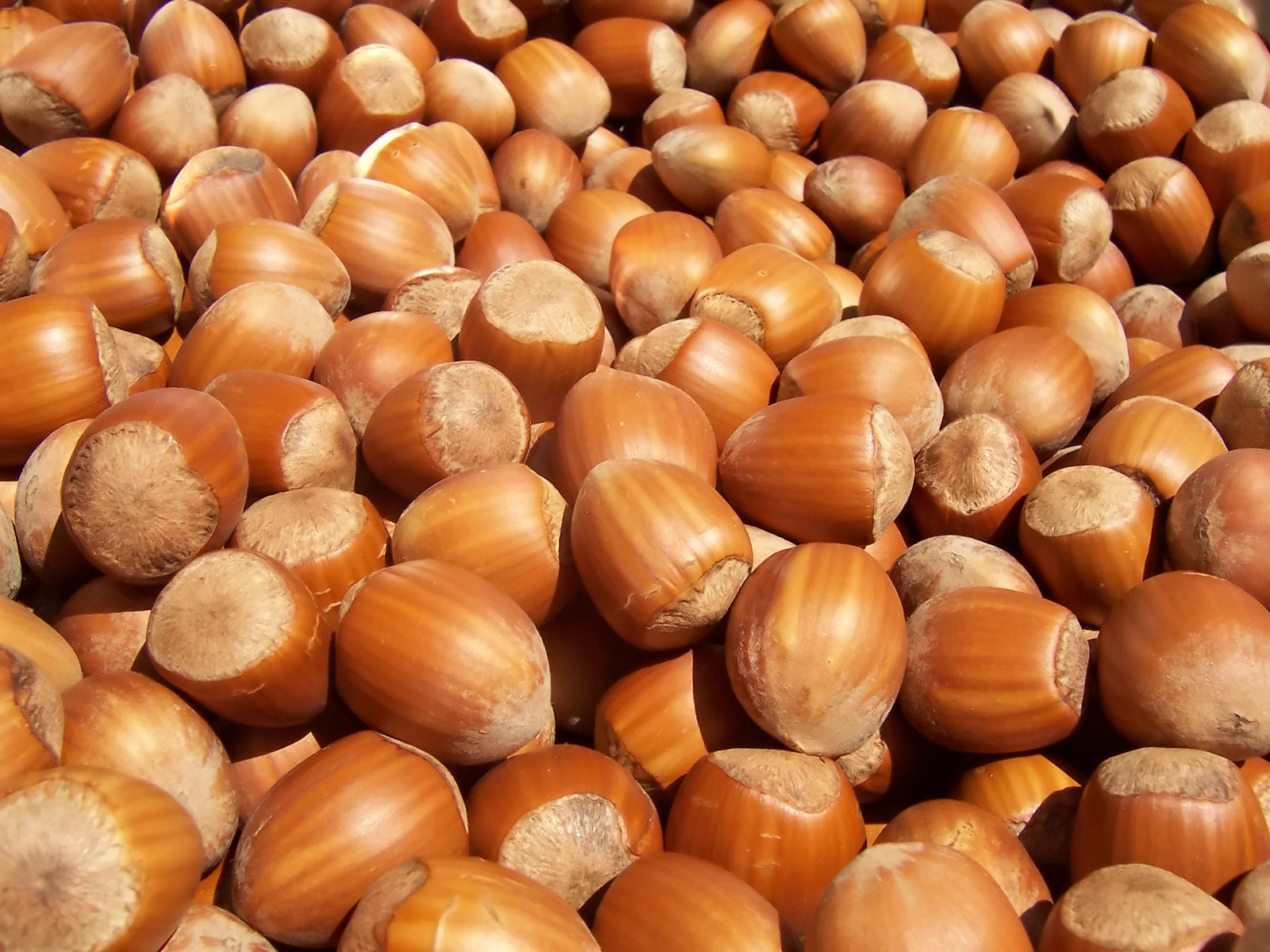 Dried Hazelnut