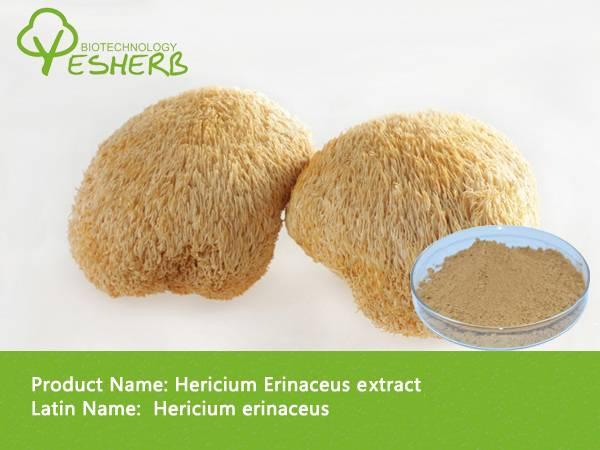 free sample high quality Hericium Erinaceus Powder