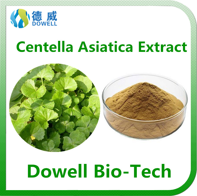 Health benefits Centella Asiatica Extract /Gotu Kola Extract powder 10% Asiaticosides
