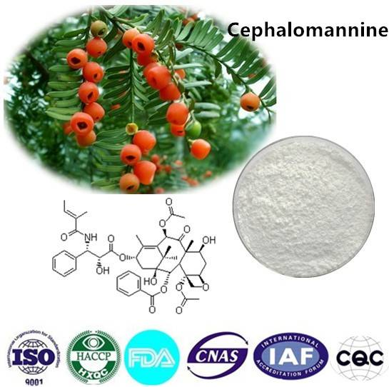 Cephalomannine  98% HPLC CAS NO:71610-00-9 1g/bag