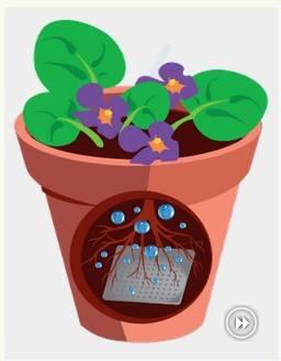 Water gel for plants