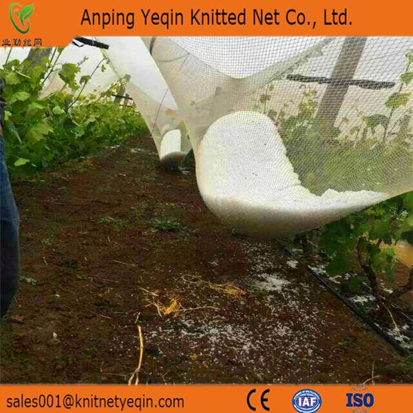 Anping facoty hot high quality anti hail nets