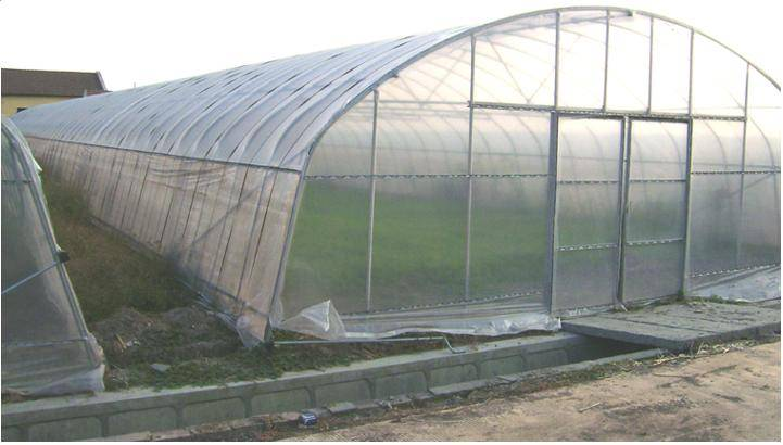 the monomer insertion shed greenhouse