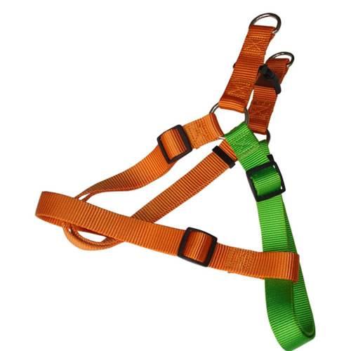 harness, leash, collar