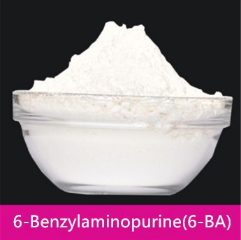Broad-spectrum plant growth regulator 6-Benzylaminopurine(6-BA)99%TC