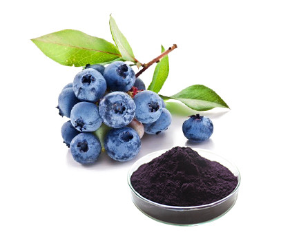 High quality Bluebery Fruit/Juice Powder,blueberry red juice concentrated,whole sale