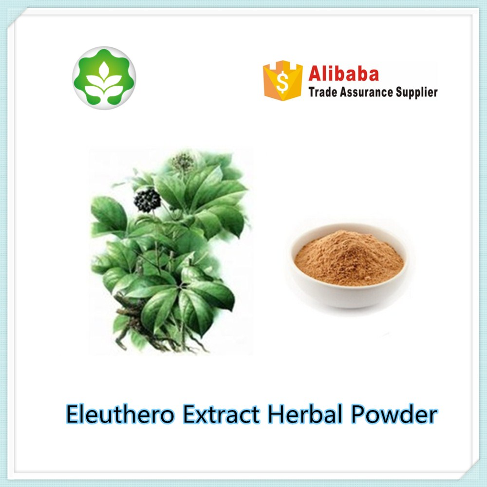 eleuthero extract herbal powder for energy solution