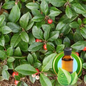 100% Pure Wintergreen Essential Oil