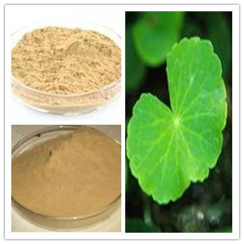 Natural Asiaticoside 80% of Gotu Kola Extract Powder
