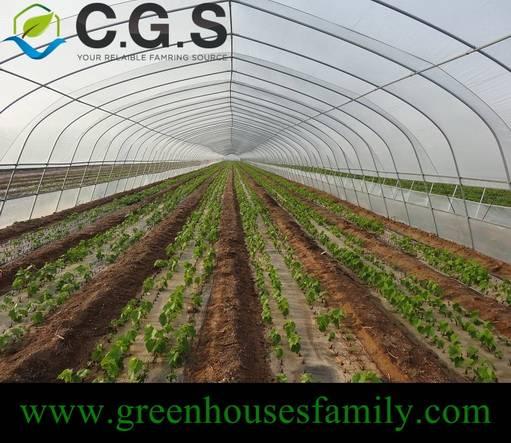 Single Cold Frame Greenhouse