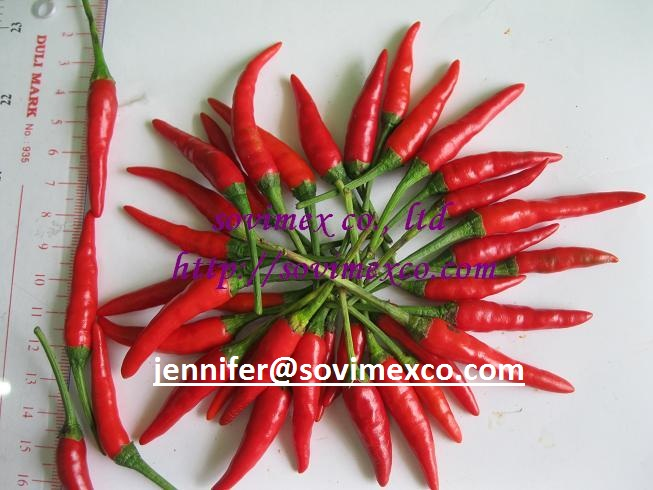 Dried chilli, Fresh chilli
