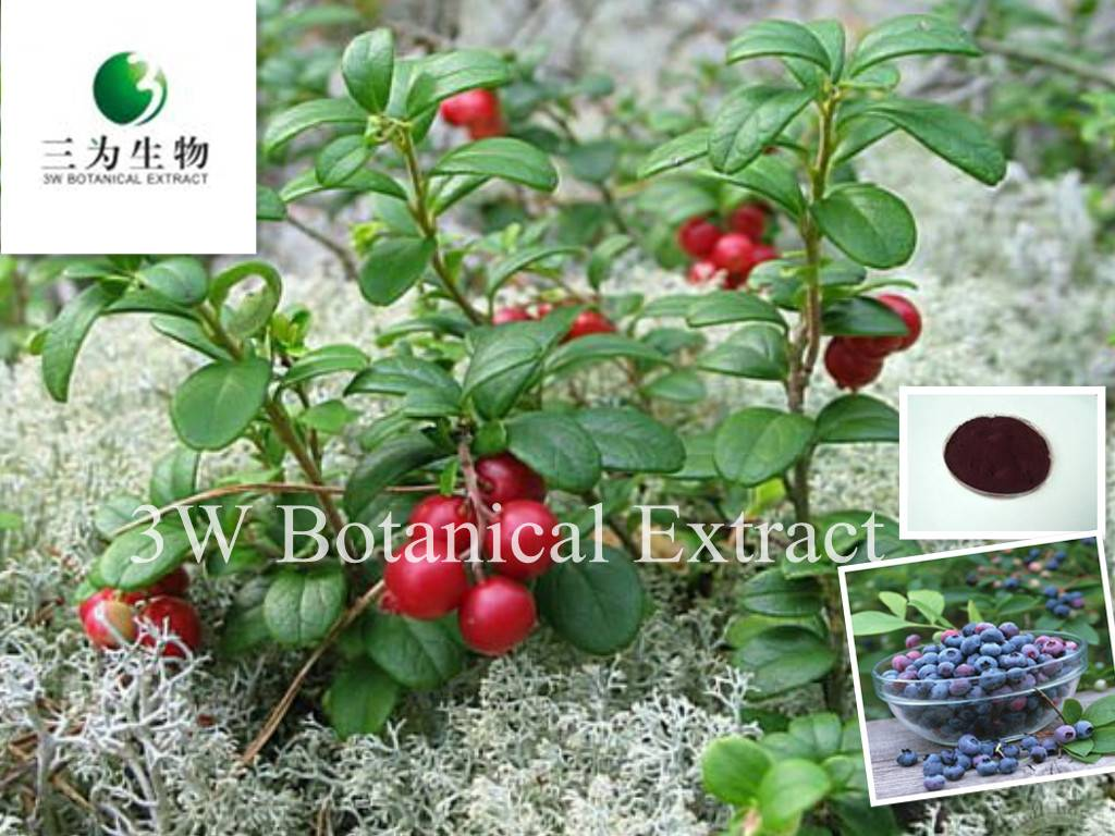 Bilberry Extract Anthocyanins(sales05@3wbio.com)