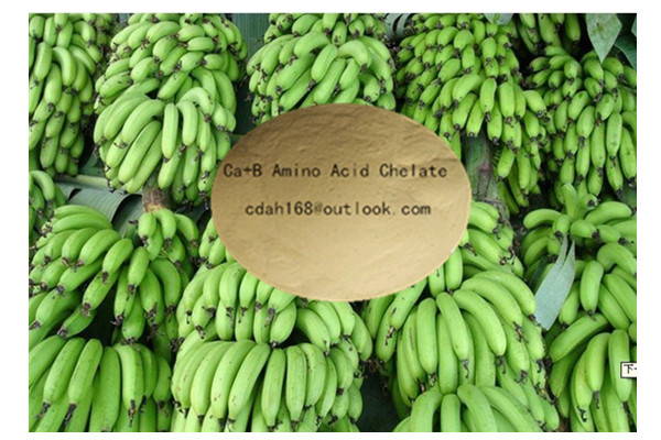 Ca+B Amino Acid Chelate Formula fertilizer for banana