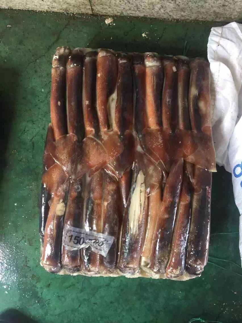 Frozen Illex Squid