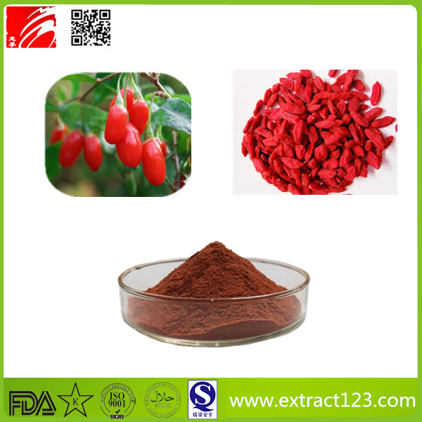 High Quality Chinese Wolfberry Extract Powder