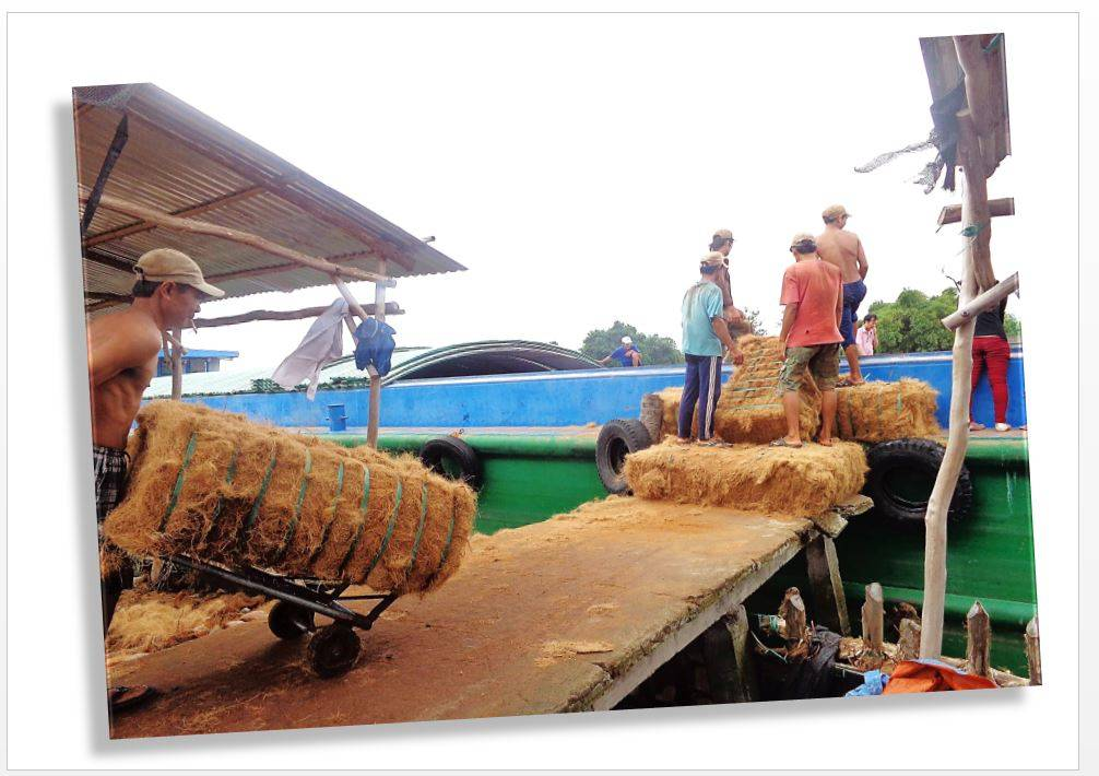 New Latest coconut coir fibre/coconut coir fiber rope