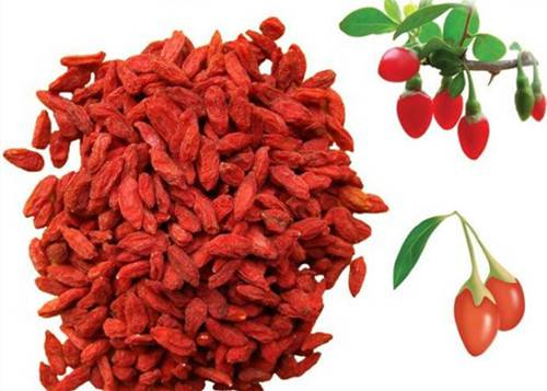 high quality dried organic ningxia goji berry
